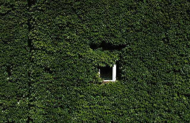 マイホームを緑で守る?壁面緑化のメリットとデメリットを正しく把握しよう!